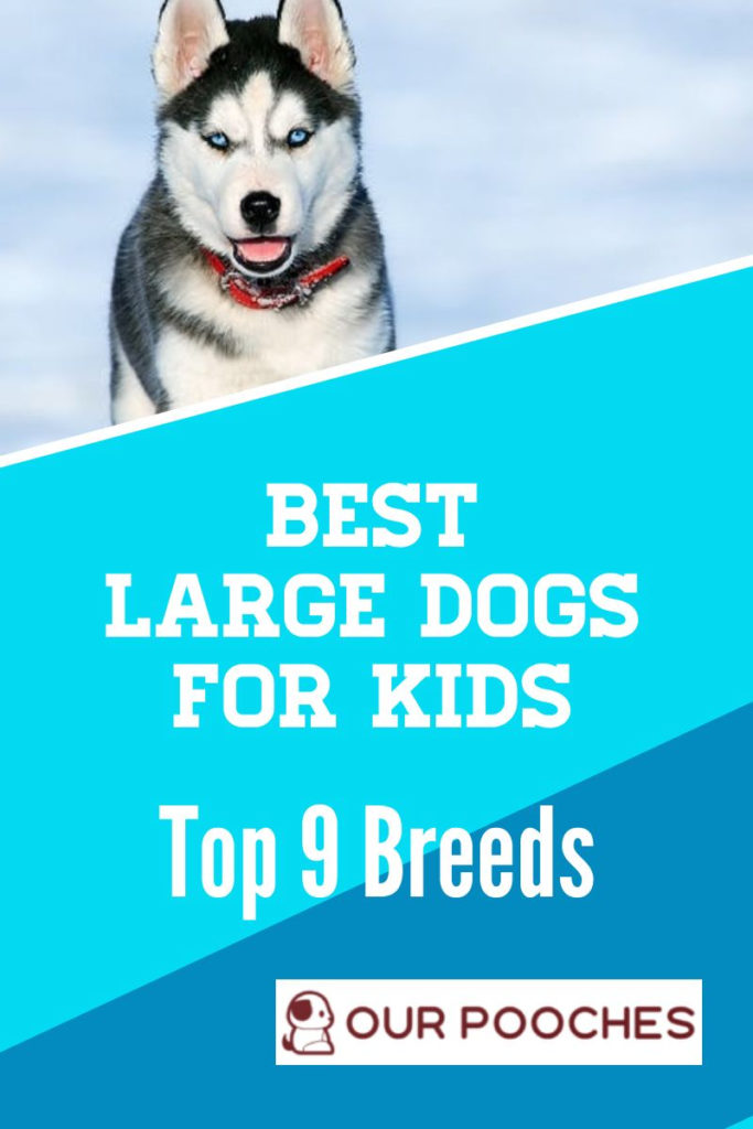 Best large dogs for kids