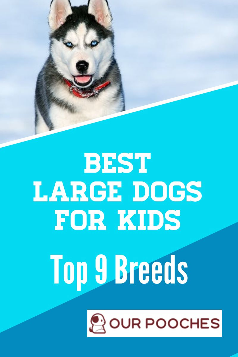 9 Of The Best Large Dogs For Kids