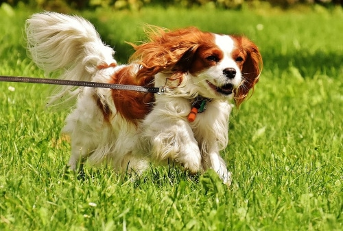 The 9 Best Small Dogs For Kids And Families