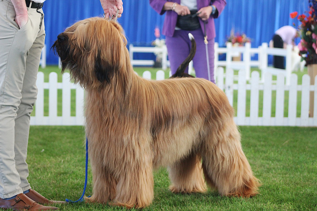 The Silliest Dog At Crufts