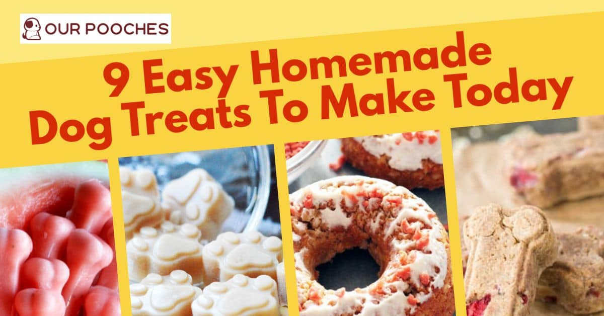 9 Easy Homemade Dog Treats To Make Today