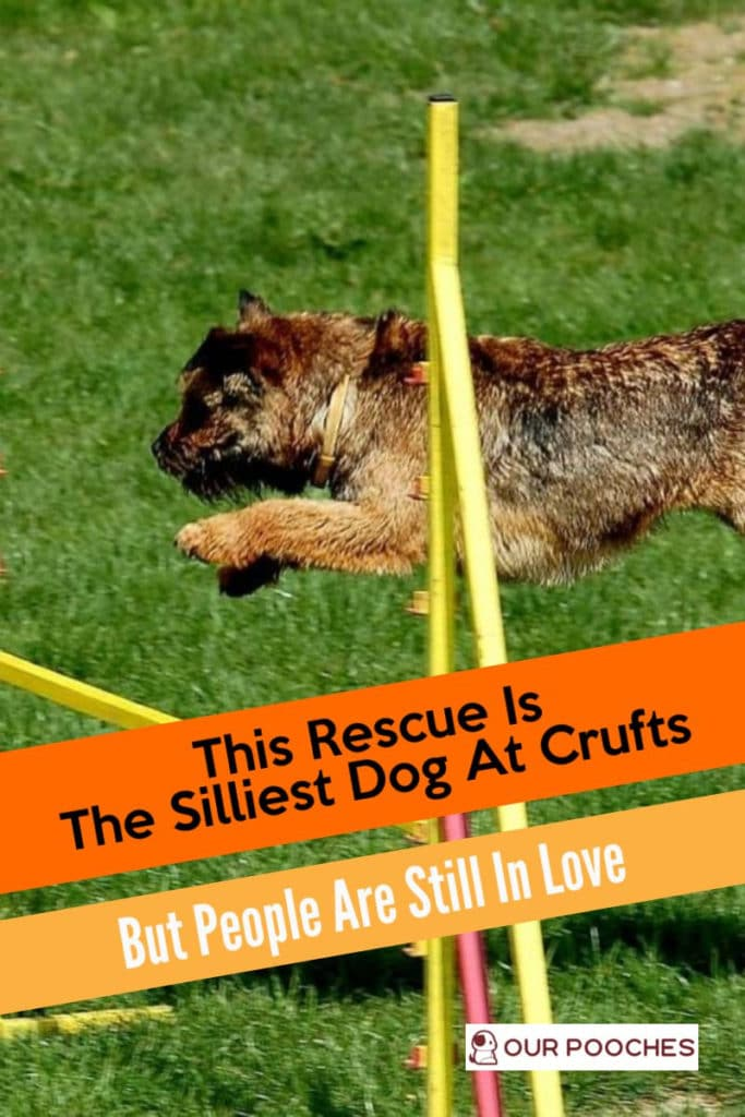 This Rescue Is The Silliest Dog At Crufts But People Are Still In Love - OurPooches