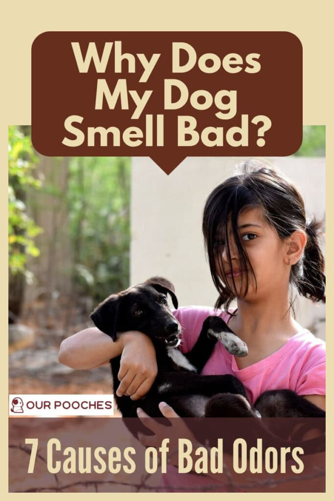 Why does my dog smell bad 7 reasons why