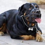 Types of Aggression In Dogs And Signs To Watch For