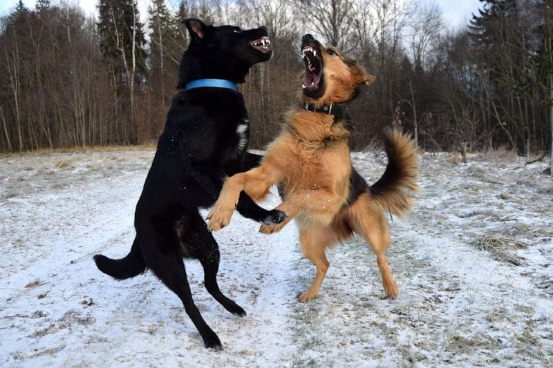 Stop Dog Aggression Against Other Dogs – In 4 Easy Steps!