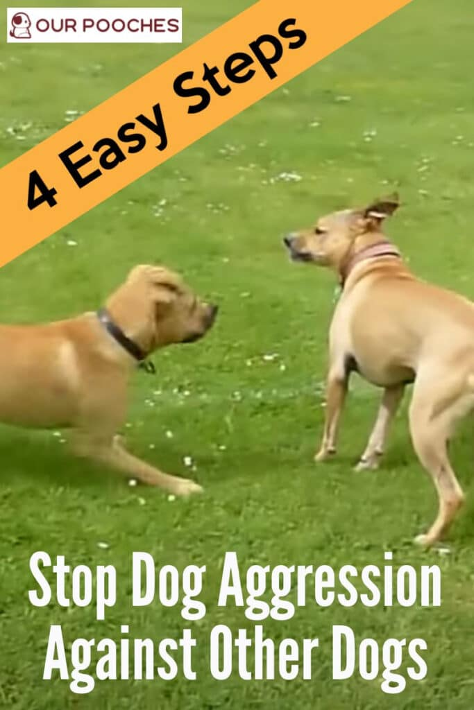 Stop dog aggression against other dogs in 4 quick steps