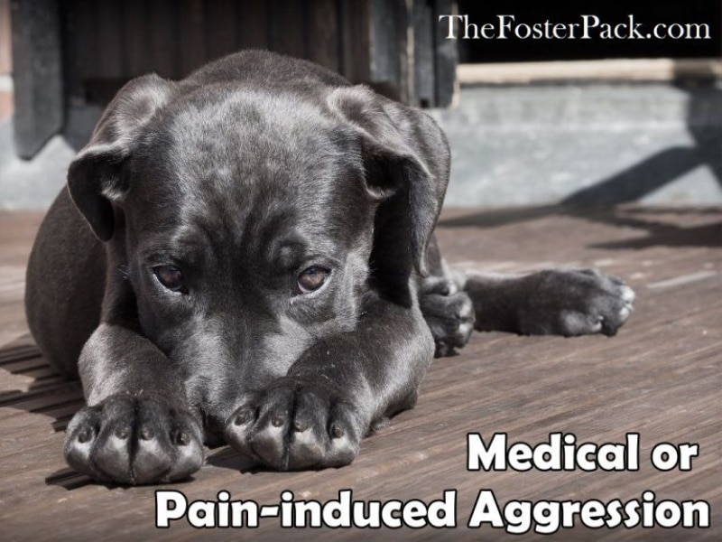 medical aggression in dogs