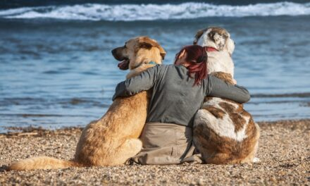 Actress Goes Gaga For Rescue Dogs: Lynch Is A Dog Lover