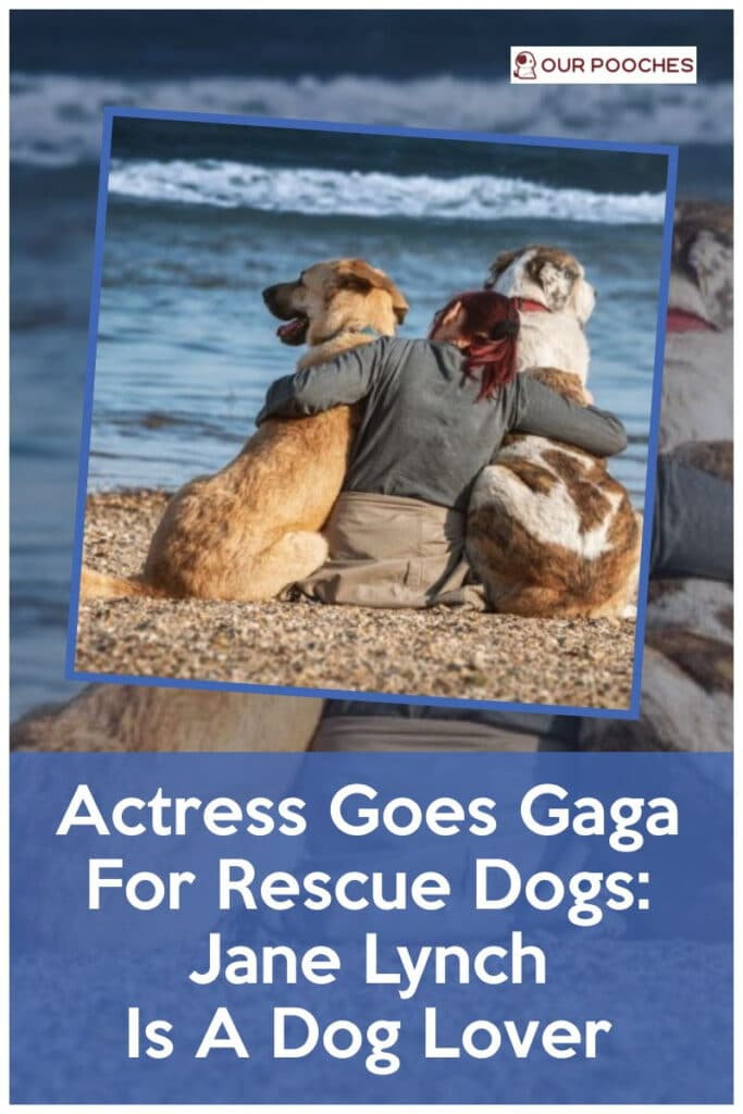 Actress Goes Gaga For Rescue Dogs Jane Lynch Is A Dog Lover