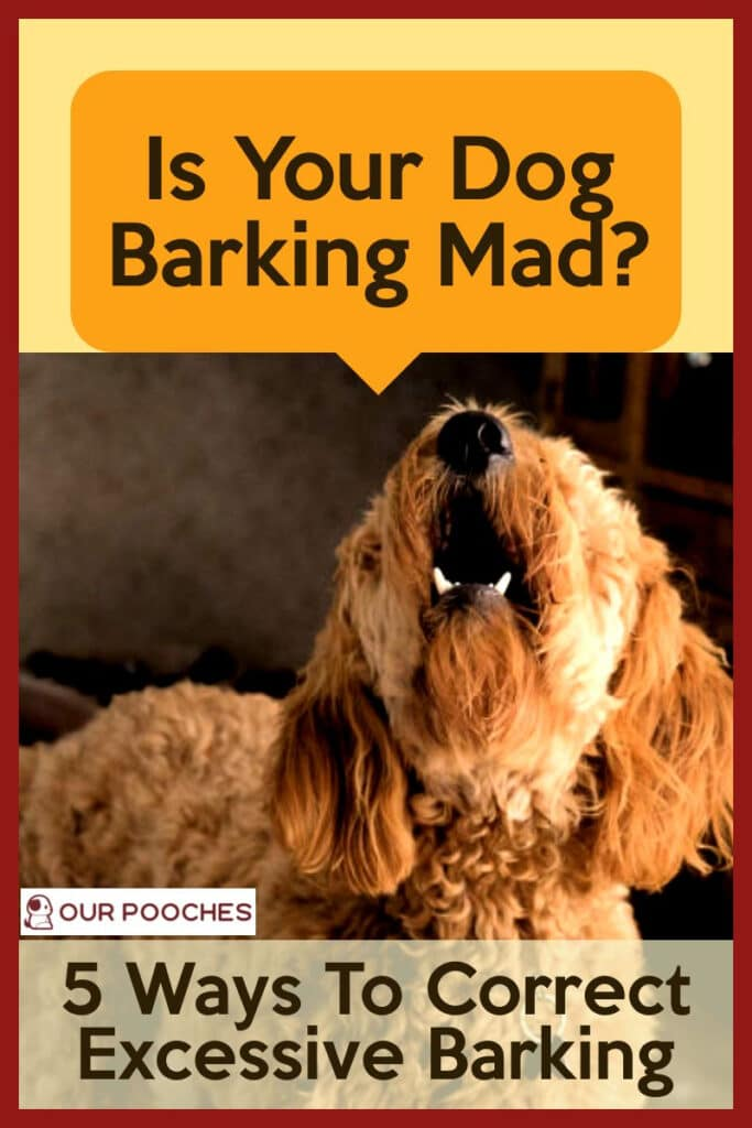 Barking Mad - 5 ways to correct excessive barking