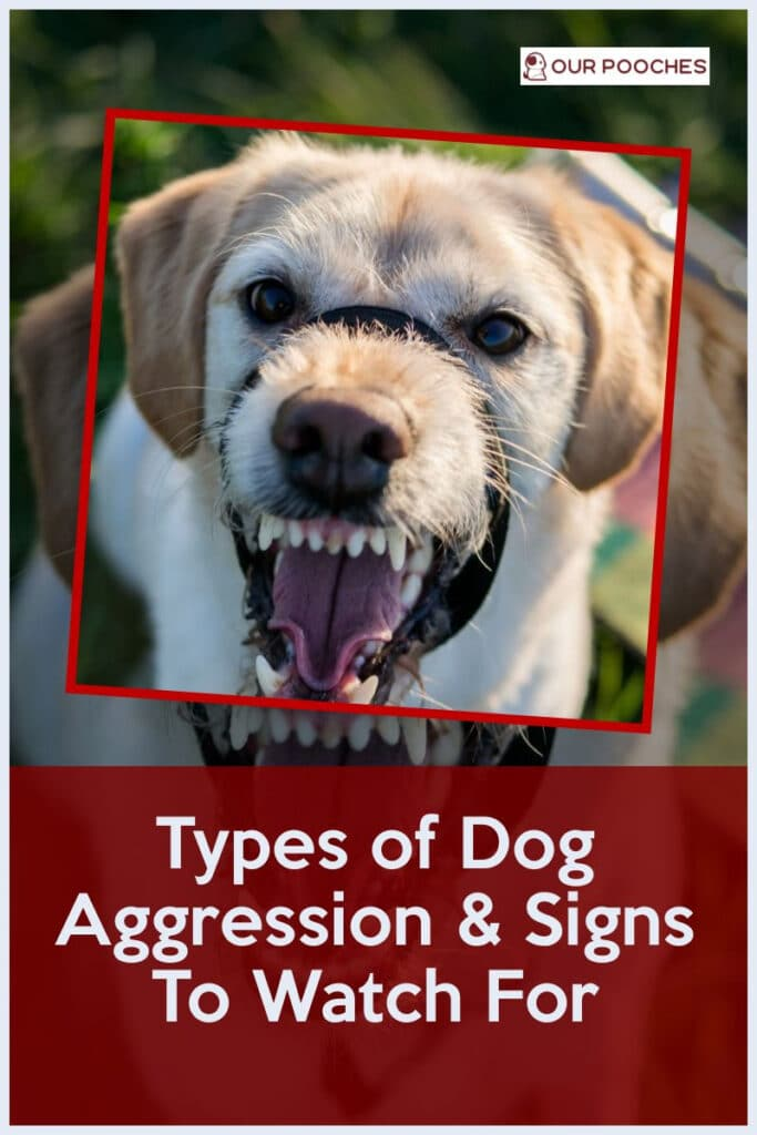 Types of Dog Aggression & Signs To Watch For
