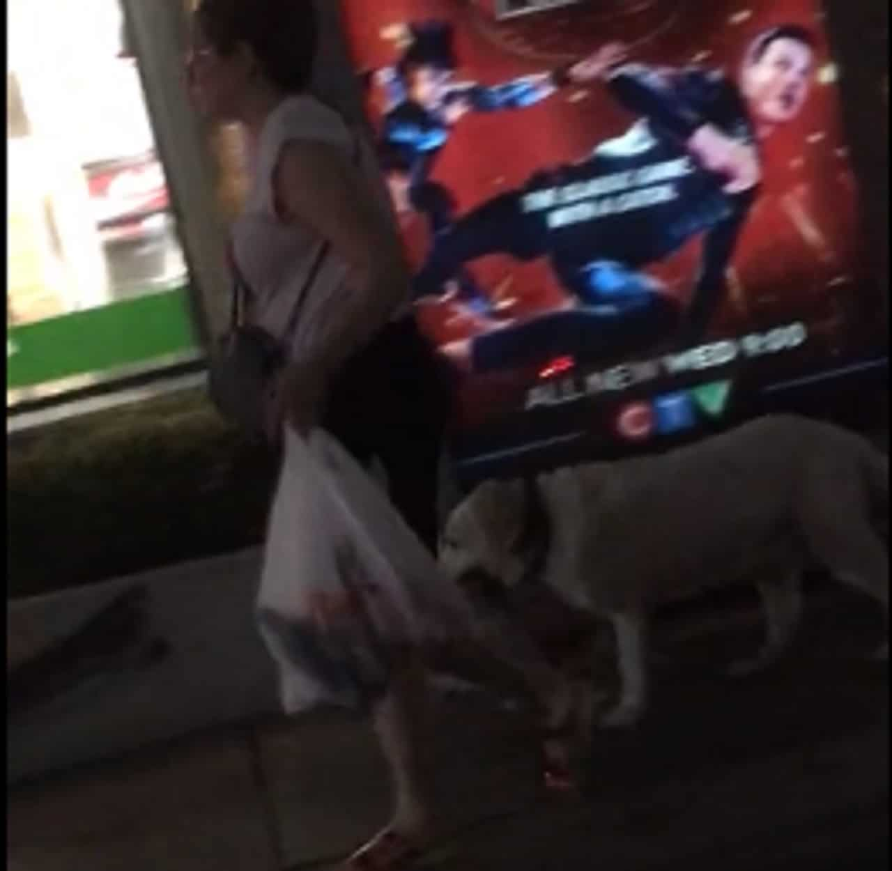 Dog helps owner with groceries