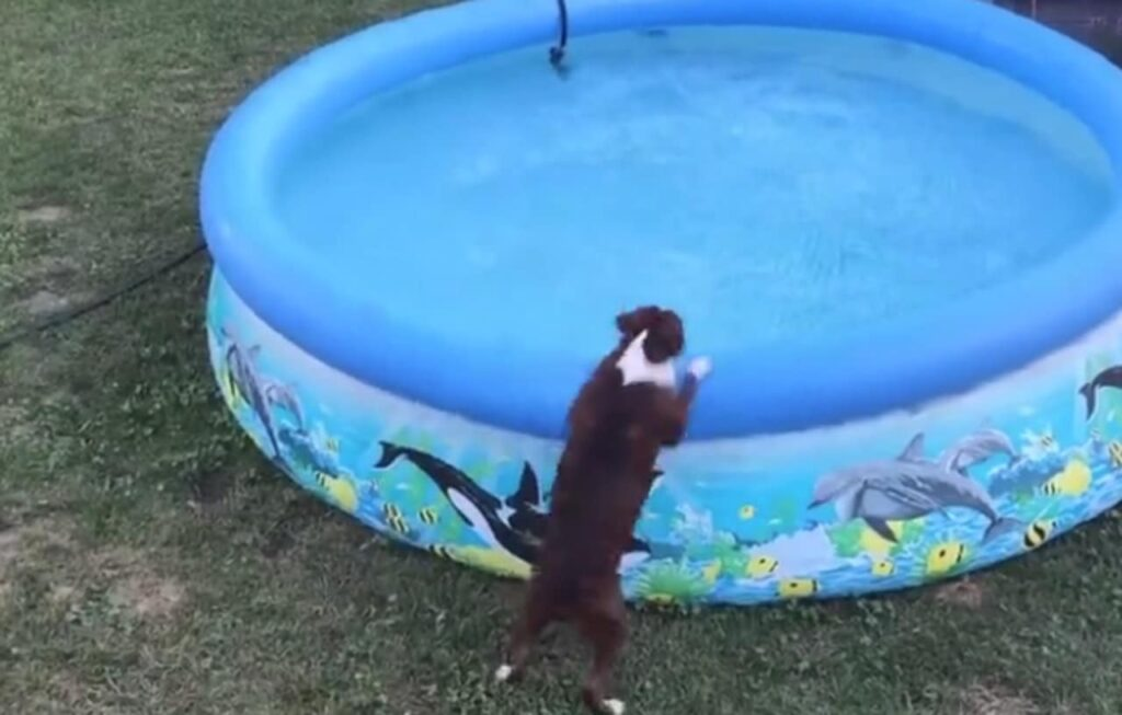Will this dog for a swim
