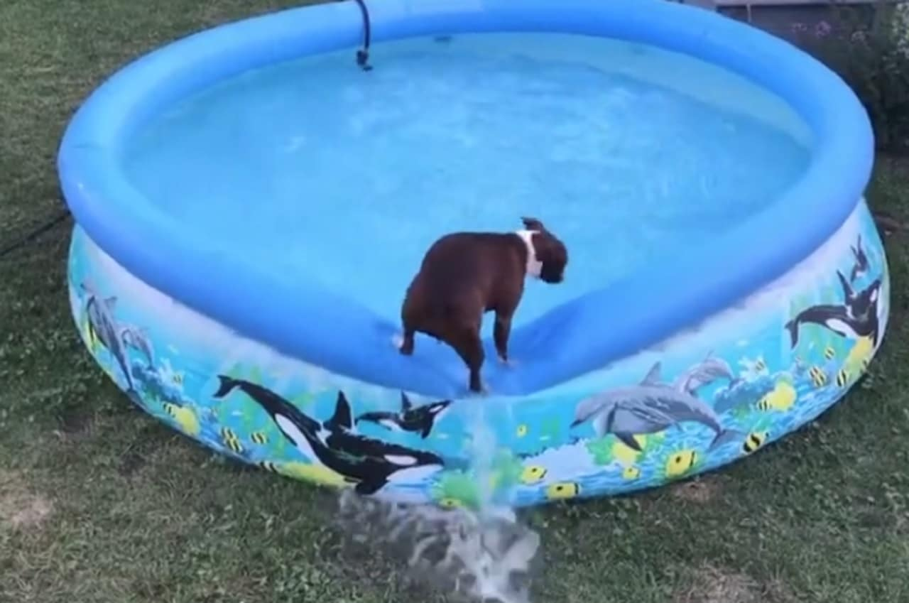 Dog wants a swim