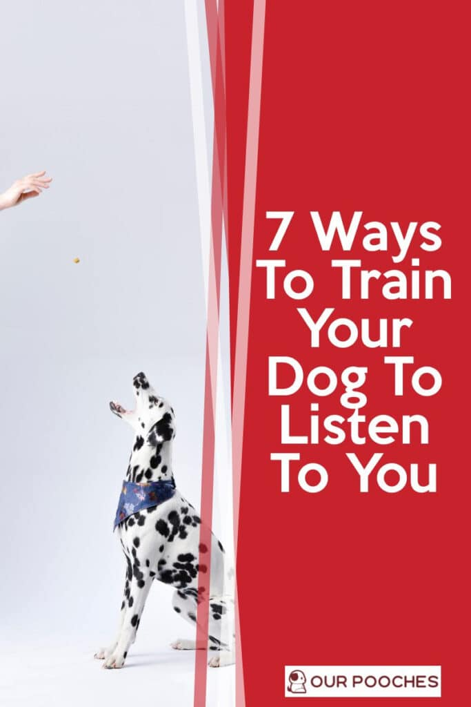 7 Ways To Train Your Dog To Listen To You
