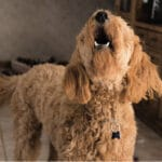 What to Do About Your Dog's Excessive Barking