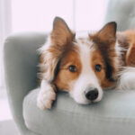 Tips for Getting Your Dog to Listen to You