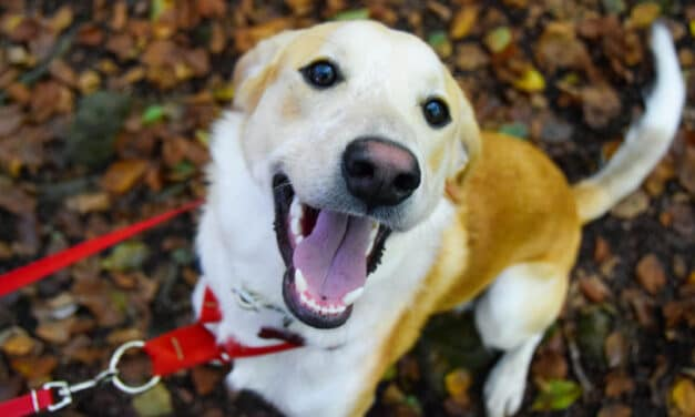 Why Do Dogs Bark? 6 Common Reasons Why