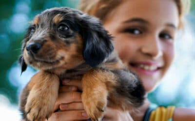 Top Tips For Socializing A Puppy With Ease