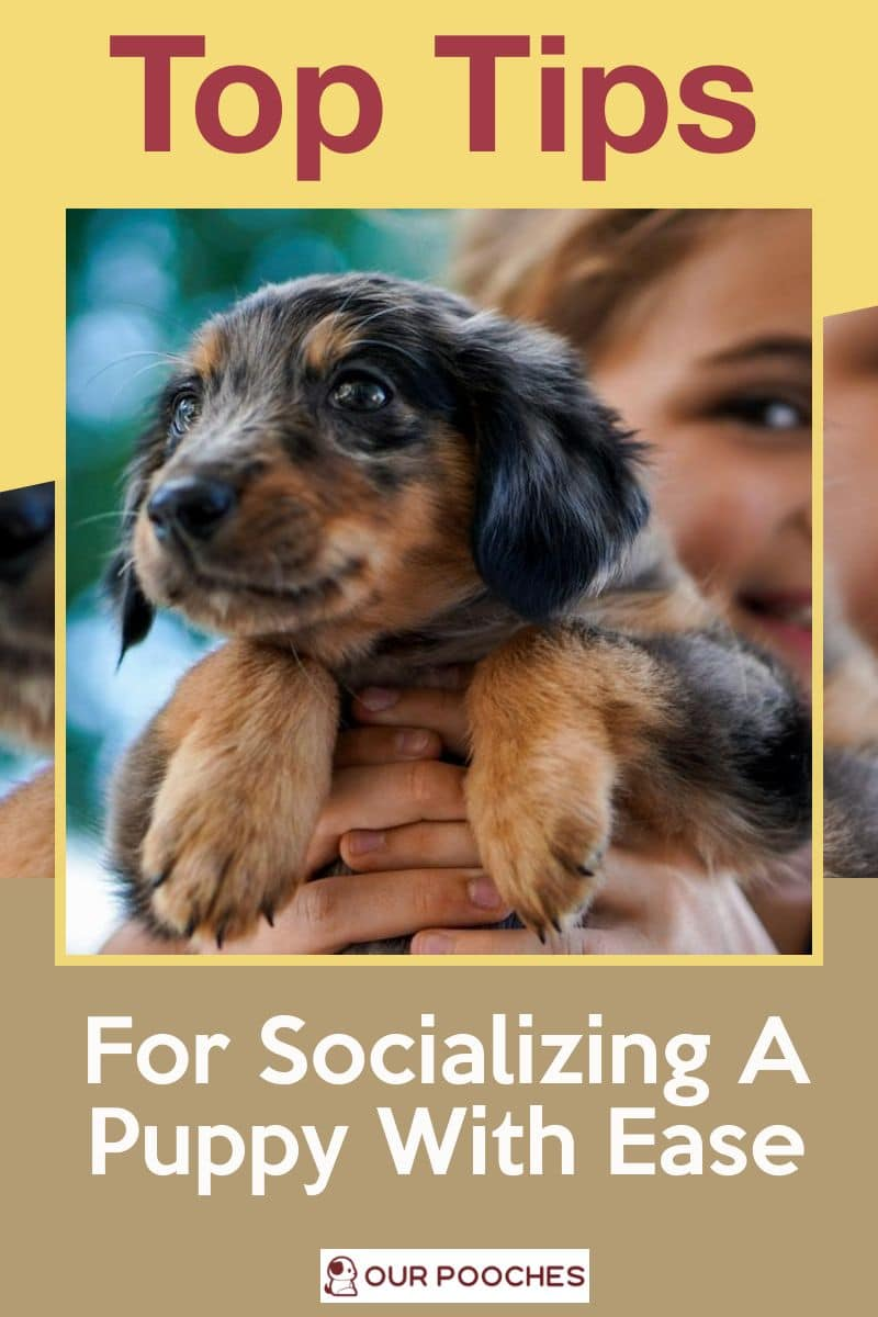 Top Tips For Socializing A Puppy With Ease vertical gold poster