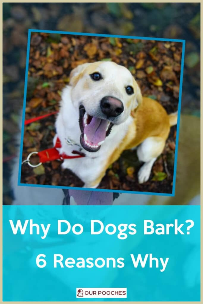 Why do dogs bark - 6 Reasons why