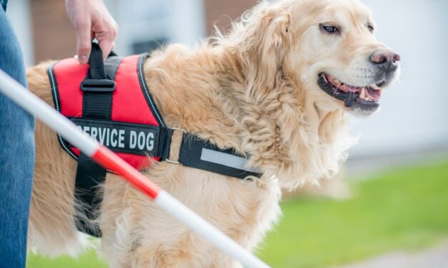 6 of the Best Service Dog Breeds