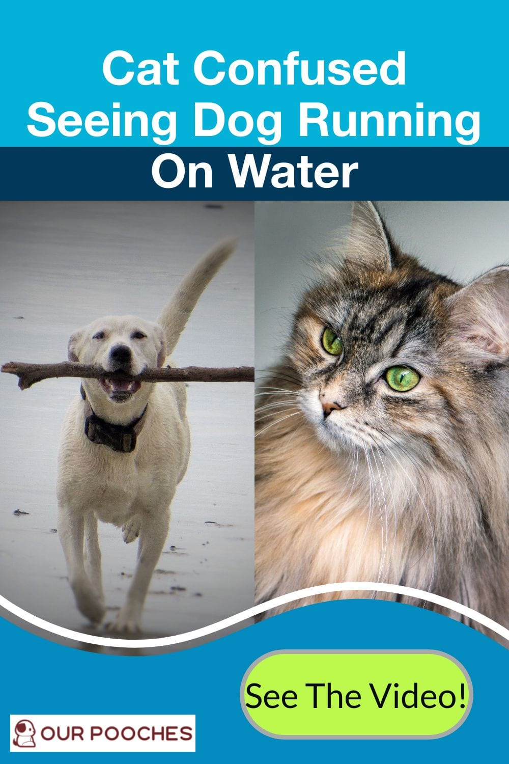 Cat confused seeing do walk on water
