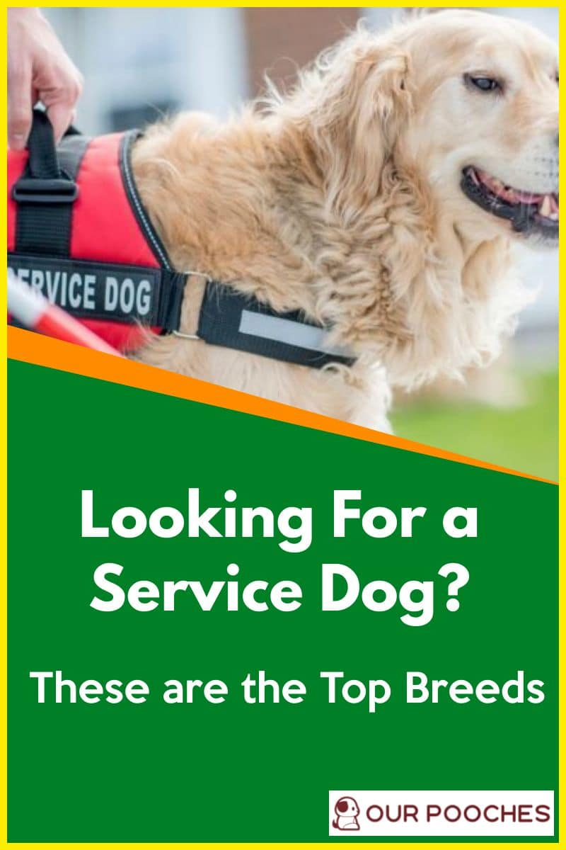 Looking for a service dog