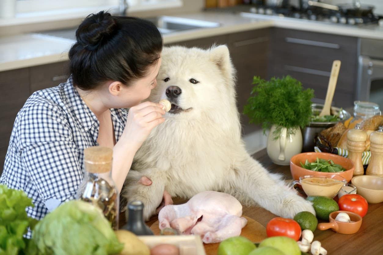 dog being hand fed by owner