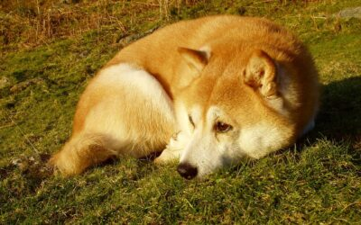 Fur Dad's Digital Artwork Of Shiba Inu And Him Receives Love From Everyone Online