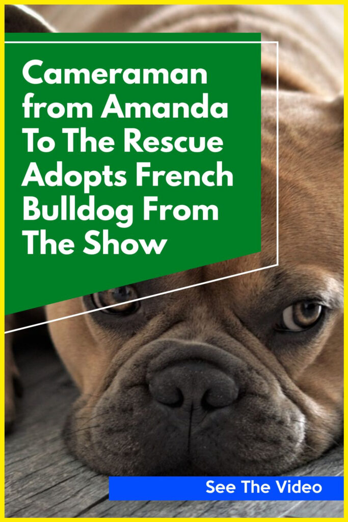 Cameraman from Amanda To The Rescue Adopts French Bulldog From The Show