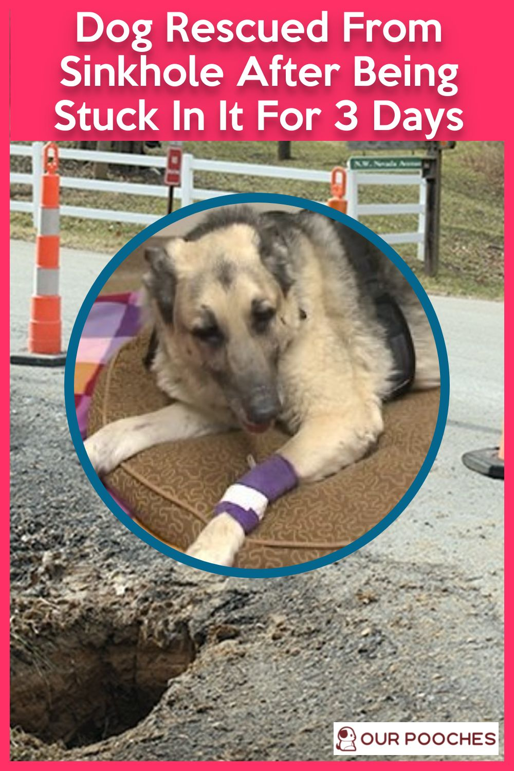 Dog Rescued From Sinkhole After Being Stuck In It For 3 Days