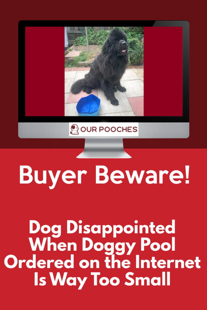 Doggie Pool Ordered on the Internet Is Way Too Small