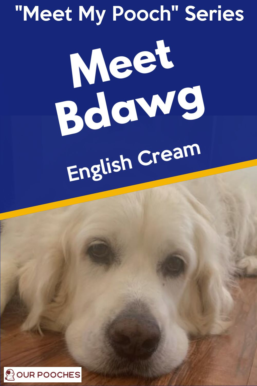 Meet Bdawg at Our Pooches