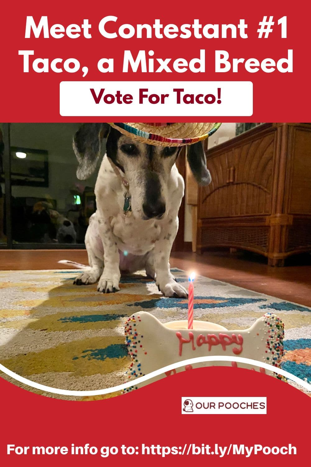 Vote Taco in the Our Pooches Coloring Book Contest