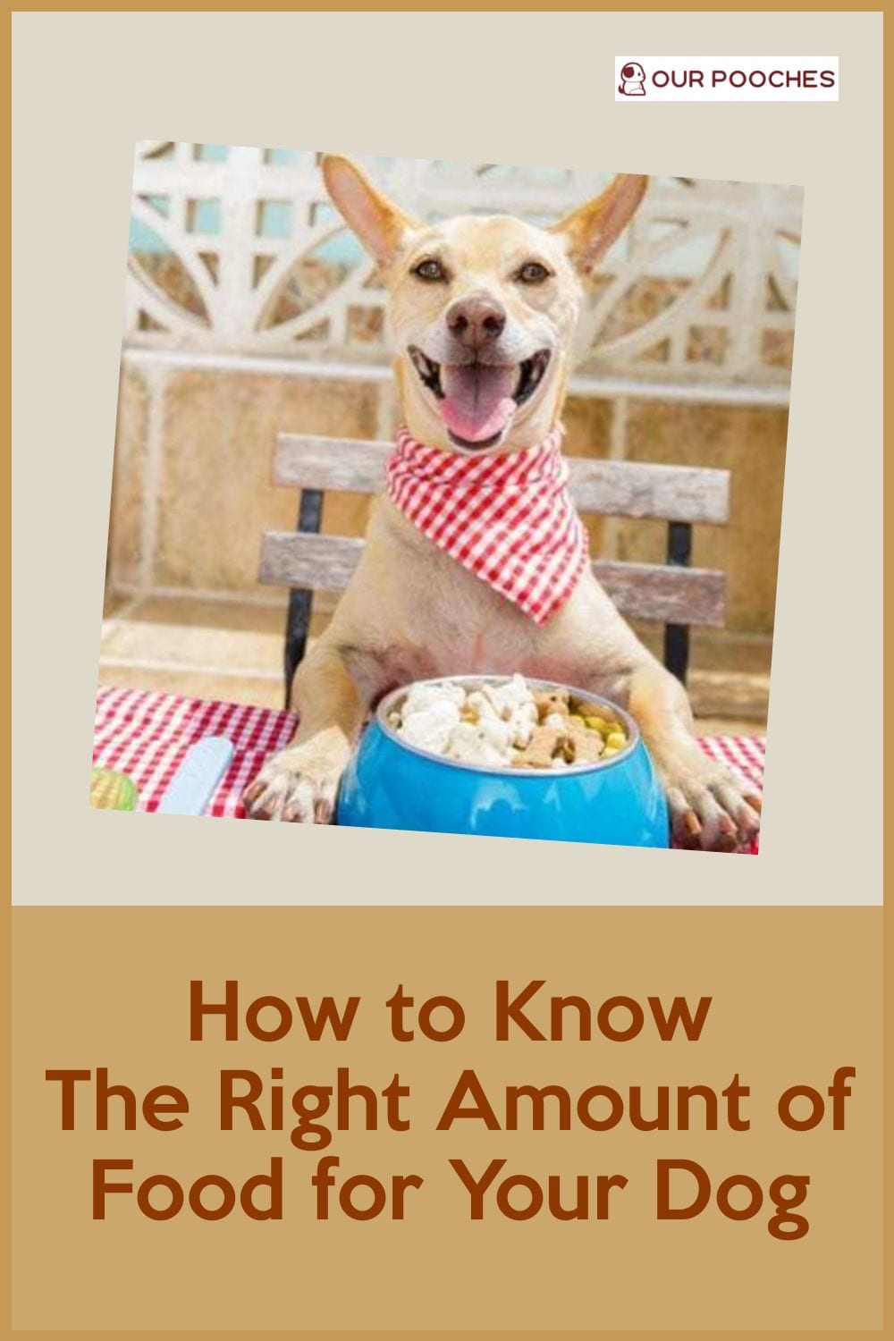 How to know the right amount of food for your dog