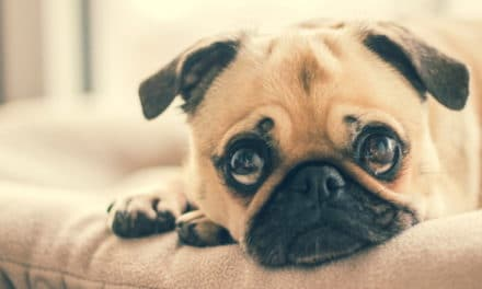 What Can I Give My Dog for Pain?