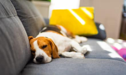 Why Do Dogs Sleep So Much?