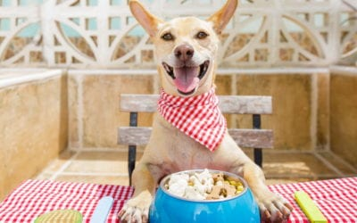 How to Know the Right Amount of Food for a Dog
