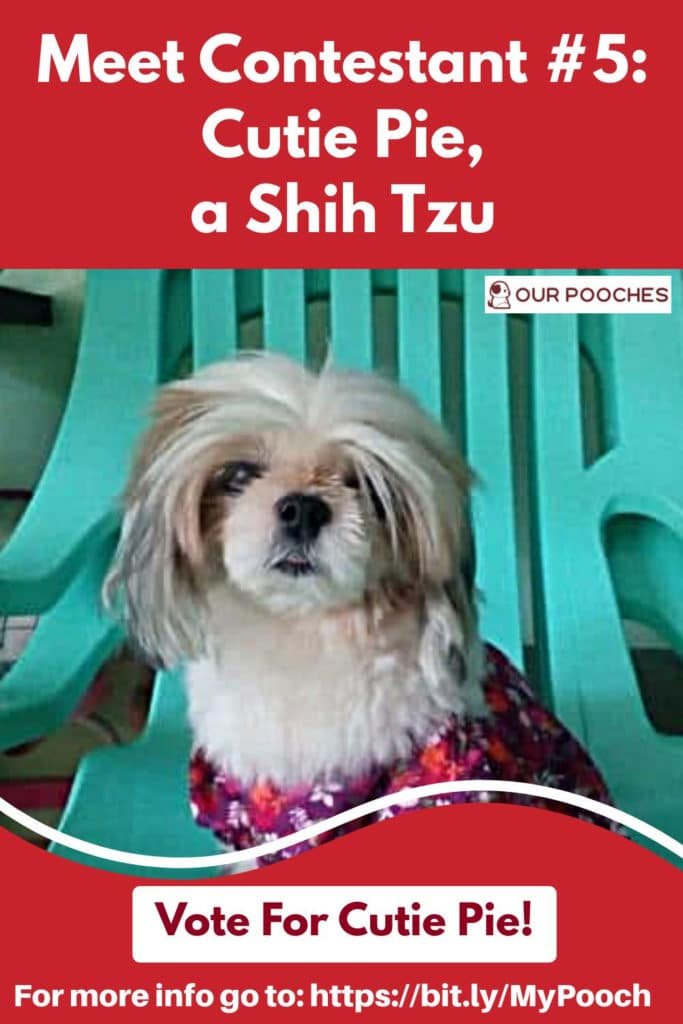 Meet Cutie Pie, Vote For Cutie Pie in the Our Pooches doggie contest - give your pup it's own web page as well as a page in our coloring book!