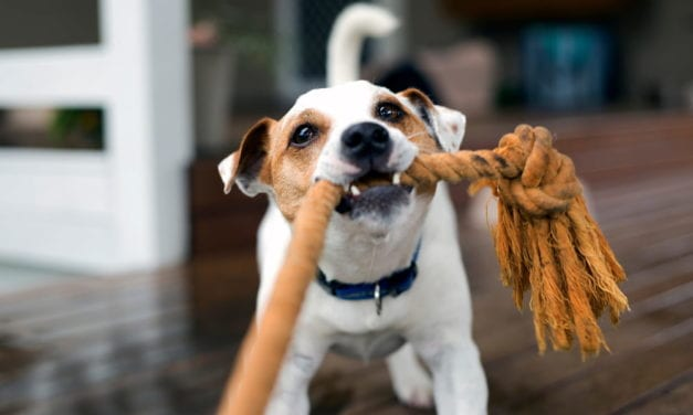 6 Indoor Games for Dogs That Are Great for Rainy Days