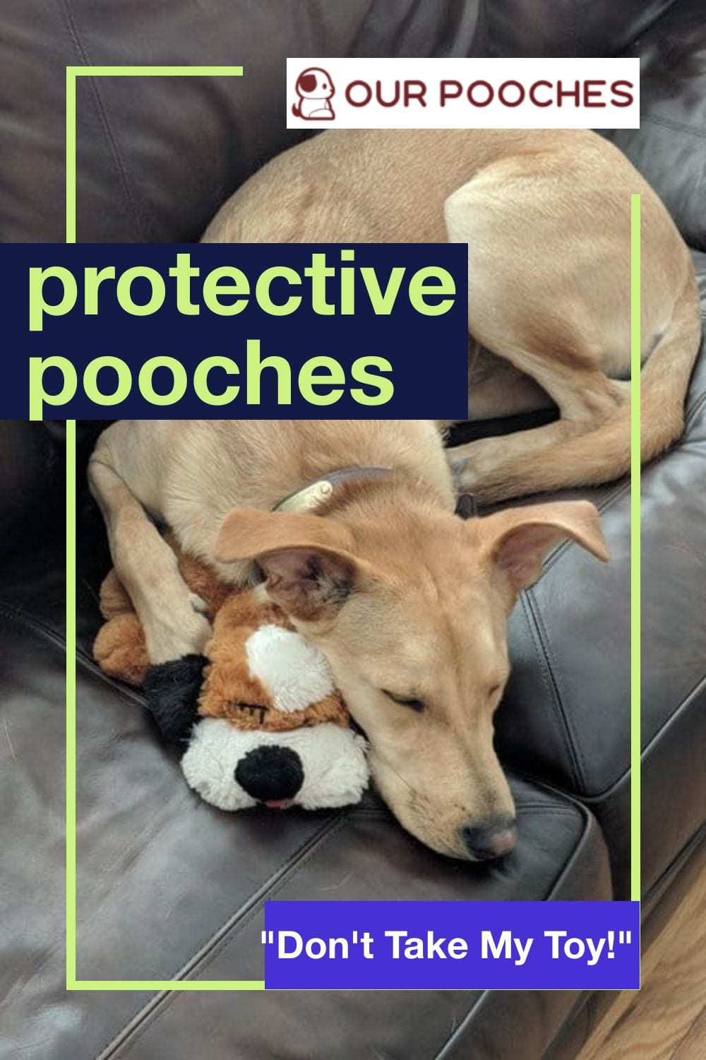 Protective pooches with toys