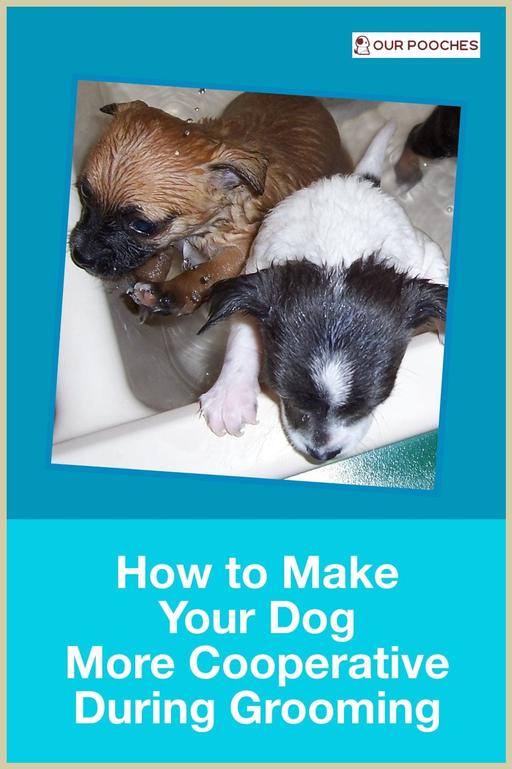 How to Make Your Dog More Cooperative for Grooming