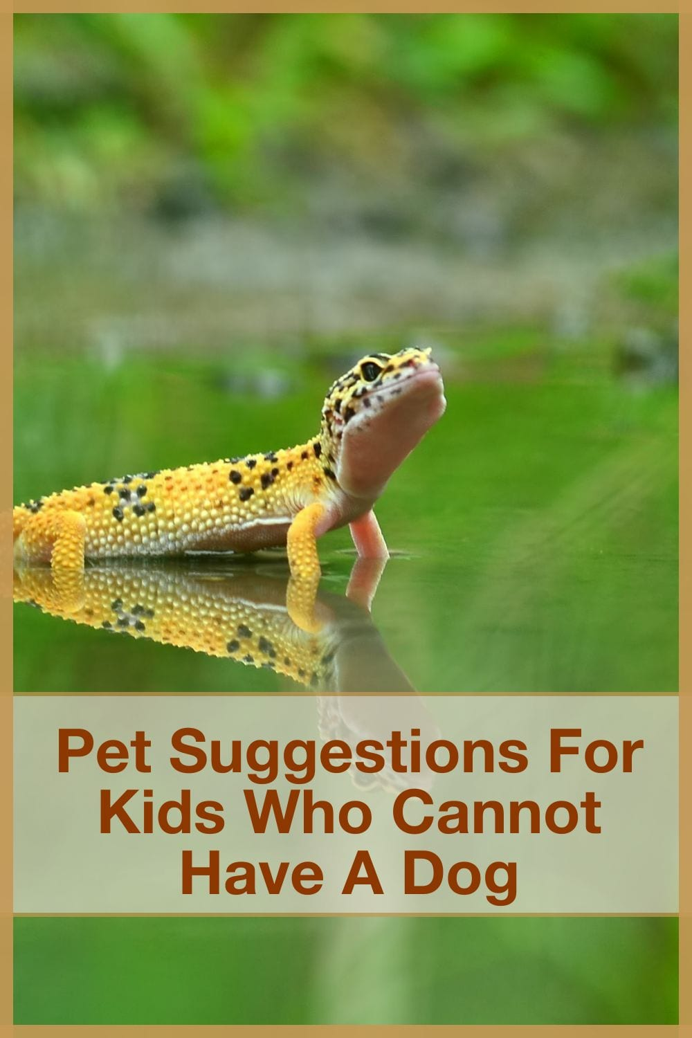 Pet Suggestions For Kids Who Cannot Have A Dog