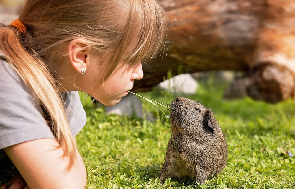 Best Pets for Kids Who Can't Have a Dog
