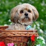 These 9 Dogs Are PERFECT for Apartment Living