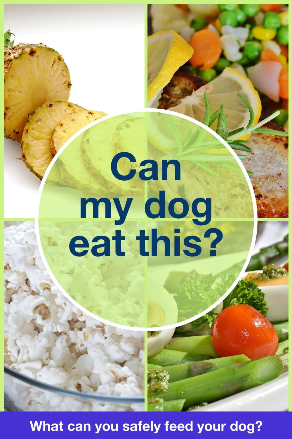 Can my dog eat this